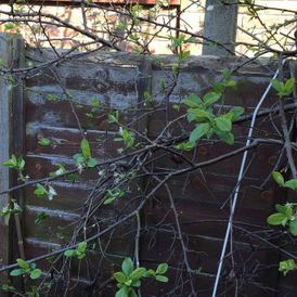 A old fence a customer wants replacing